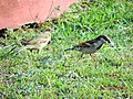 Lovebirds on their queste.jpg