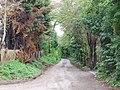 Lower Bloors Lane, Rainham - geograph.org.uk - 1805023.jpg