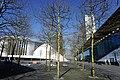 Luxembourg, Les Platanes de l'Europe Irlande (01).jpg