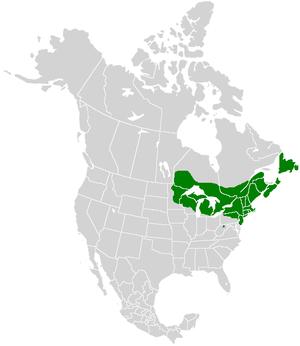 Lycaena epixanthe - Image: Lycaena epixanthe range map