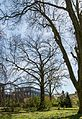 Münster, Park Sentmaring, Naturdenkmal -- 2015 -- 5653.jpg