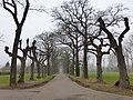 Maasmechelen Leut Park Vilain XIIII dreef van knotlindes - 219801 - onroerenderfgoed.jpg