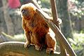 Macaco-prego-galego 5.jpg