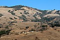 Macedo Ranch - Mt. Diablo State Park (East Bay Regional Park District) - panoramio.jpg