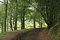 Maker with Rame, woodland track 1 - geograph.org.uk - 968372.jpg