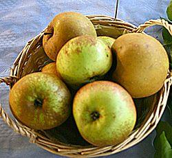 vanliga svenska äppelsorter