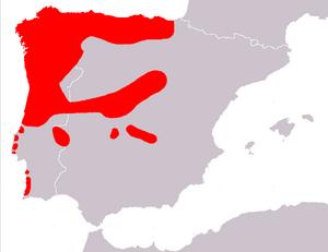Iberian emerald lizard - Image: Mapa Lacerta schreiberi