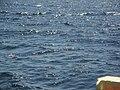 Mar de água, que chega a fazer ondas no reservatório da Usina de Promissão (530 Kms²), que foi represado a partir de outubro de 1974. A travessia de balsa tem 3.5 Kms e dura cerca de 40 minutos. Antes d - panoramio.jpg
