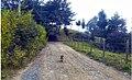 Marinilla Colombia - Street Dogs Perros Callejeros 11.jpg