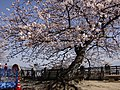 Marunouchi, Matsuyama, Ehime Prefecture 790-0008, Japan - panoramio (37).jpg