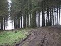 Mature Pine forest. - geograph.org.uk - 1222041.jpg