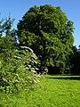 Meadow - geograph.org.uk - 517540.jpg