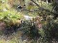 Meet me at Australia's Favorite Creek, Rendez Vous Creek.jpg