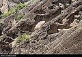 Mehrab Kuh 2020-05-01 22.jpg