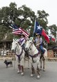 """Melissa Lauppe carries the U.S. flag aboard Tex, and her daughter, Jessi the Texas flag aboard Ironhead, in the annual Mardi Gras parade with a Texas touch in little Bandera, the """"Cowboy Capital of LCCN2014631468.tif"""