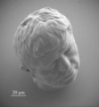 Micro-sculpture - Microlight3D.tif