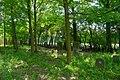 Minsk Mazowiecki, Poland - panoramio (72).jpg