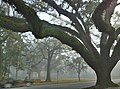 Mobile Alabama on a foggy morning - panoramio.jpg