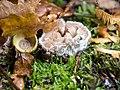 Moldy fungus (10493281496).jpg