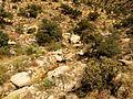 Molino Creek - Flickr - treegrow (3).jpg