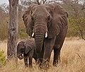 Mommy I'm Shy by Linda Kavanagh (49935606798).jpg