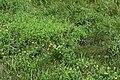 Monarch on milkweed 3 (2503f2f4-3a40-4cde-82a7-3d1078d79a6d).JPG