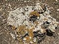Montana Colorada - stone with lichen - Fuerteventura - 12.jpg