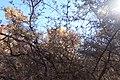Montezuma Castle - 37952592404.jpg