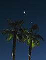 Moon above palms.jpg