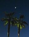 Moon above palms.jpg