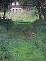 Morgan Arboretum 09.jpg