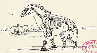 Moropus - First complete skeletal restoration, 1918