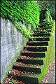 Moss-covered stairs (23997318066).jpg