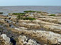 Mudflats, Bridgwater Bay - geograph.org.uk - 1168549.jpg