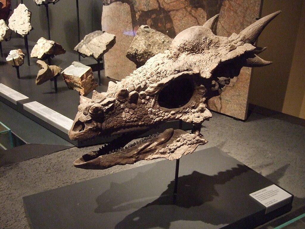 Fossile de dinosaure (on dirait un dragon) dans le musée d'histoire naturelle de Berlin.