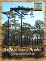 My Public Lands Roadtrip- Baby Bird Banding in the Lathrop Bayou in Florida (18250132178).jpg