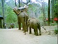 Myanmar Elephant Ride.jpg