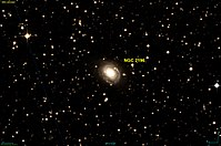 NGC 2196 DSS.jpg