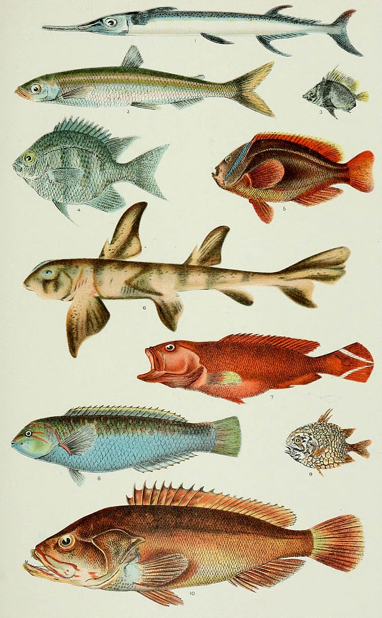 NIE 1905 Philippine Islands - Fishes of the Philippines.jpg