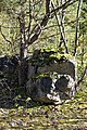 NSG Steinbruch Holzmühle (65).jpg