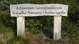 Narsarsuaq - Arboretum Groenlandicum