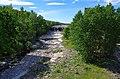 Narva joaastangud.jpg
