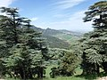 National Parc Theniet El Had.jpg