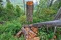 Naturschutzgebiet Feldberg (Black Forest) - Alpiner Steig am Feldberg - Bild 018.jpg