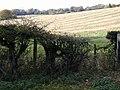 Near Forestside - geograph.org.uk - 432111.jpg