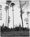 Newberry County, South Carolina. Erosion Control. (No detailed description given.) - NARA - 522723.tif