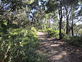 Newport lakes trail.jpg