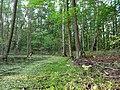 Next to the Teufelsbruch swamp in spring.jpg