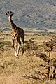 Ngorongoro, Tanzania - panoramio (3).jpg