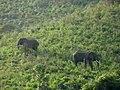 Ngorongoro Crater (4) (14145852732).jpg